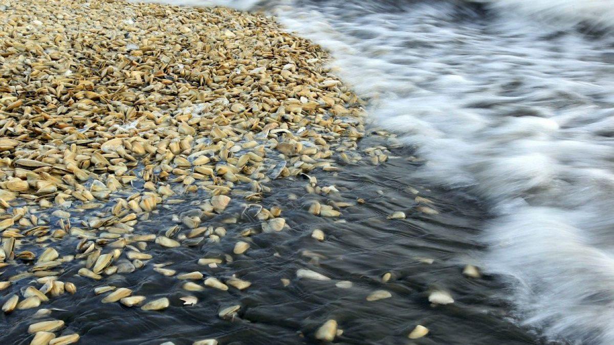 La Catástrofe de Chiloé explicada con manzanitas